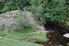 IngletonFalls (9 of 28)-2 (AndyOrritt) Tags: tree green water grass landscape waterfall moss rocks hills gorge