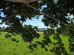 DSC01023 (andre vautour) Tags: favorite tree green nature graveyard horizontal landscape blog published branch flash review collection gress daytrip porthope andrevautour josephscrivensgrave