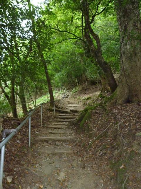木の根参道|