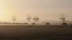 Landschaft unter Nebelschichten; Meggerdorf, Stapelholm (4) (Chironius) Tags: morning fog sunrise germany deutschland dawn nebel alba amanecer alemania dmmerung landschaft sonnenaufgang allemagne morgen niebla brouillard germania ochtend schleswigholstein matin  morgens zonsopgang mattina aube ogie pomie morgendmmerung morgengrauen niemcy dageraad    stapelholm  meggerdorf pomienie szlezwigholsztyn