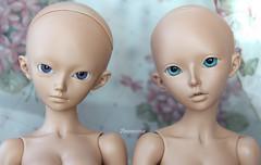 Shushu & Celine (Dancing*Butterfly) Tags: doll tan bjd fairyland abjd celine msd mnf shushu minifee