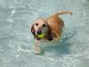 Life is Good (kaw209) Tags: blue dog sc water pool yellow swimming tail ears canine charleston daisy waterpark dogdayafternoon bassador ts3 wannamakercountypark bassetlabmix whirlinwaters panasonicts3