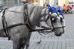 008771 - Caballos (M.Peinado) Tags: animal canon caballo caballos praha praga animales chequia esko eskrepublika 2013 ccby r canoneos60d repblicachecha 03092013 septiembrede2013