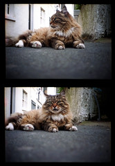 Agat 18K (Daniel Cane) Tags: road street pet cats pets colour building eye film animal animals architecture cat 35mm buildings hair fur sussex paw eyes feline brighton fuji floor pavement superia hove ground iso negative 35mmfilm 400 frame half epson fujifilm gutter analogue paws halfframe eastsussex agat18k 400iso filmstrip 18k kemptown colournegative myneighbourhood agat belomo c41 brightonandhove v500 fujicolour belomoagat18k epsonv500 agat18kmultiples kemptownhairycat