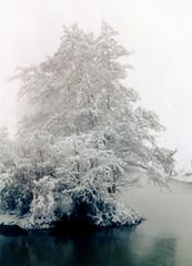 winter in holland (9) (bertknot) Tags: winter winterinholland