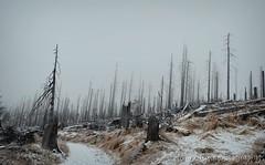 Death (blueandyou.photography) Tags: schnee winter snow nature fog germany landscape death rachel nikon nebel natur landschaft tod vision:mountain=0894 vision:outdoor=0852 vision:clouds=0668 vision:sky=0826 blueandyouphotography