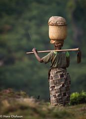 Bwindi, Uganda (Hans Olofsson) Tags: uganda bwindi africanwomen teplantage