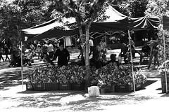 Selling flowers (rferrarim) Tags: flowers brasil market sunday portoalegre fair selling