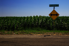 Left Or Right (Abel AP) Tags: california road usa sign rural canon cornfield streetsign tracy agriculture dslr trafficsign countryroad tracyca sanjoaquincounty paradiseave eosrebelt3i abelalcantarphotography
