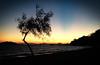 Going going gone (VillaRhapsody) Tags: sunset sea tree beach coast mediterranean mimosa fethiye calis challengeyouwinner kocacalis