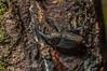 Beetle (mcvmjr1971) Tags: black macro brasil bug insect sãopaulo beetle nikond50 tromba macrolife