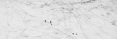 Two People and Their Dog (J.Bierwas) Tags: bear winter two people bw panorama dog white mountain snow black love nature foot couple little zoom small tracks trails panoramic trail relationship prints toydog tiltshift