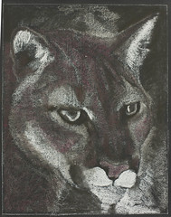 Puma (ArneKaiser) Tags: 4thgrade autoimport edited howtodrawa manandanimal mrkaisersclass pineforestschool waldorf blackboarddrawing chalk chalkart chalkdrawings cougar mountainlion panther puma flagstaff arizona unitedstates boarddrawings chalkboard flickr