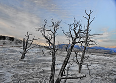 Returning back to earth (KayYen) Tags: park trees nature dead dry sulphur yellowstone sulfur dying nationalgeographic personalfavorites