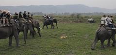 Kaziranga National Park India-055 (scott1723) Tags: park india elephant one safari national rhino horn assam rhinoceros kaziranga onehorned