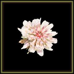 wildflower (III) (gtncats) Tags: nature wildflowers photographyforrecreation