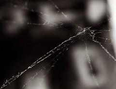* (PattyK.) Tags: blackandwhite spider nikon web hellas greece grecia spidersweb griechenland myphotos grece blackandwhitephotography ilovephotography ellada ioannina giannina giannena epirus amateurphotographer   ipiros    nikond3100
