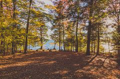 Cranberry Lake Campground, New York (Tony Webster) Tags: cranberrylake cranberrylakecampground newyork upstatenewyork autumn autumncolors autumncolours campground camping campsite fall fallcolors fallcolours fallfoliage foliage leaves trees unitedstates us