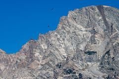 in flight (ColoradoFlip) Tags: grandtetonnationalpark wyoming