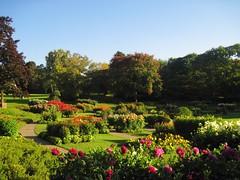 Dahlia Field (Hannelore_B) Tags: dahlien dalias blume flower park grugapark