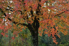 (careth@2012) Tags: fall leaves autumn nature scene scenery scenic view ngc