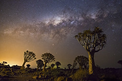 Quiver Tree Forest (Astro-Tanja) Tags: quiver quivertree keetmanshoop namibia astrophotography astronomy astrotanja astrotanjadotcom milkyway milklyway nightphotography nightphoto nightsky