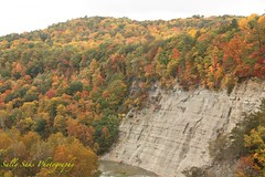 IMG_9177 (Sally Knox Sakshaug) Tags: letchworth state park new york autumn fall bright sunshine grandcanyonoftheeast portagecanyon october outdoors nature scenic pretty beautiful calm peaceful serene leaf leaves orange yellow red brown tree trees bush forest woods wood bark log trunk rock rocks grey gray shale cliff mountain valley gorge ravine river genesee limestone