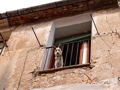 Pues, esa no est mal.... Esprame, que bajo!!! (AGirau ...) Tags: agirauflickr flickr agirau balcn perro