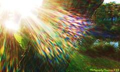24. SUNDANCE: Dragon's Breath! (www.YouTube.com/PhotographyPassions) Tags: sun sundance bright rainbow tree landscape sunset sunny sunrays colourful rainbows rainbowrays brightrays sunnyrays rayssunshine rainbowlight light sparkles flare sunflare creative creativephotography creativecomposition artistic original