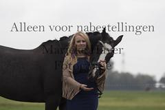 15 oktober 2016-96 (MZorro4) Tags: mariekehaverfotografie oudesluis schagen paardenfotografie portretfotos rijden wwwmariekehaverfotografienlpaarden