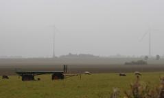 3-IMG_6266 (hemingwayfoto) Tags: acker anhnger energie facebookalbum haustier landschaft landwirtschaft lebewesen mllingen nebel panther regionhannover schaf strom tier wanderung wiese windrad