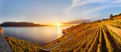 Corseaux_Sunset_20-10-16 (Andy'z Art) Tags: andyzart lake landscape lac leman colors colorful coucherdesoleil suisse switzerland swiss sunset vaud vineyards view vignes lavaux corseaux nikon nikkor nikond800 1424 f28