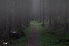 The path (MNP[FR]) Tags: 2016 ecosse lochness scotland trees fog forest path alone woods lonely hiking solitude samsung arbres fort seul brouillard randonne sentier loch ness nx1