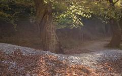 The path (Chris Ntardis graphy) Tags: tree autumn epirus ioannina d750 greece river riverbank chrisntardis leaves fall nature