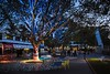 GAREMA PLACE #BACKYARD EXPERIMENT, CANBERRA, ACT (AILA National Festival 2016) (WE-EF LIGHTING) Tags: garemaplace act canberra aila australianinstituteoflandscapearchitects 2016 flc131 flc141 projector flood floodlight tree rgbw snoot weeflighting public space feature accent walkway plaza