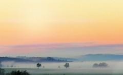 Dream a dream (eagle1effi) Tags: fog mist neben schnbuchrand alleenstrasse jakobsweg tbingen waldhausen bebenhausen nordstadt crop