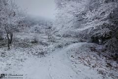 Nel bosco di cristallo (EmozionInUnClick - l'Avventuriero's photos) Tags: bosco galaverna montesanvicino neve sentiero