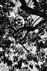 Halloween_Street_Photography__Leopoldo_Rivera_Films_Fall_2016_Video_Production_Fine_Art_Photography_Aerial_Imaging (1 of 1) (LeoRiveraMedia) Tags: halloween spooky bw blackandwhite fall2016 leopoldo leopoldorivera photography rivera streetphotography wwwleopoldoriveracom wwwleopoldoriverafilmscom portfolio create monochrome outdoor
