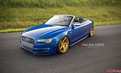 Audi S5 Paired with Candy Gold Velos D5 Wheels by GMP Performance (vividracing) Tags: audi candygold centerlock d5 directional fitment forged gmpperformance hardware hubcentric lightweight painted powdercoated s5 velos wheels wholesale
