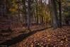 Autumn colors (ℝakel_ℰlke ﴾͡๏̯͡๏﴿) Tags: rakel raquel elke rakelelke raquelelke rakelmurcia españa spain espagne europa europe granada andalucia lapuebladedonfabrique lasagra lassantas nikon nikond300s d300s nikkor18–200 objetivo18200mm otoño autumn colores color paisaje landscape