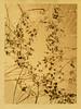Autumn remnants (mabtud) Tags: mamiya c330 ilford delta 100 rodinal printed developed champion novolith selenium kodak bromesko