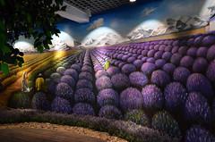 DSC_9800p (Milan Tvrd) Tags: datangjin china nanjing lavender lavanda saliunca levandule