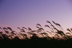 (shimanosu) Tags: nikon fe ainikkor 50mm f14 velvia 100 reversal film sky autumn sunset snap japan