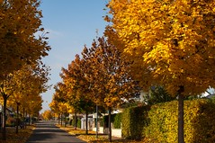 Herbstallee (fish161174) Tags: herbst stadeckenelsheim bume baum allee