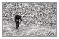 SHF_9635_Farmer (Tuan Ru) Tags: 1dmarkiii 14mm 100mm 135mm 1d 1dx 2016 2470mm 50mm 70200mm canon canon1d canoneos1dmarkiii canoneos1dx chndung bw black blackandwhite white entrng en envtrng trng environment farmer cngnhn nngdn tuanrau tuan ru