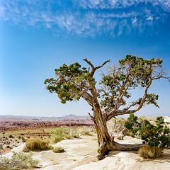 Some Where Along the Road (LXG_Photos) Tags: sky tree 645e analog desert m645 portra400 film