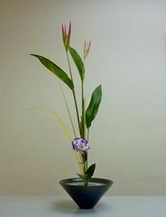 Shoka Shimputai (Grace1868) Tags: shoka heliconia ikebana ikenobo purple orange