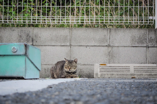 Today's Cat@2013-06-14