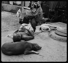 Dogs Day Afternoon (firoze shakir photographerno1) Tags: god streetphotography dogdayafternoon manjul bandrabazarroad beggarpoet firstcartoon nextlaxman