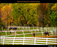 ranch autumn trees horses ontario canada fall zeiss fence... (Photo: episa on Flickr)